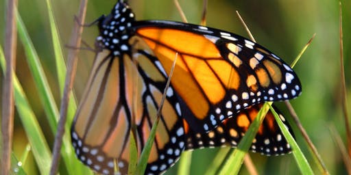 Nature Storytime for Sprouts 2019: Monarchs