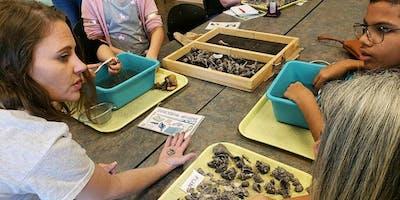 Volunteer Archaeology Lab