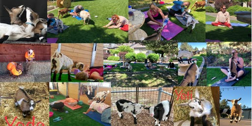Goat Yoga Experience Saturday
