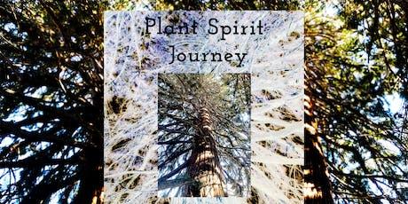 Plant Spirit Journey with Ponderosa Pine tickets