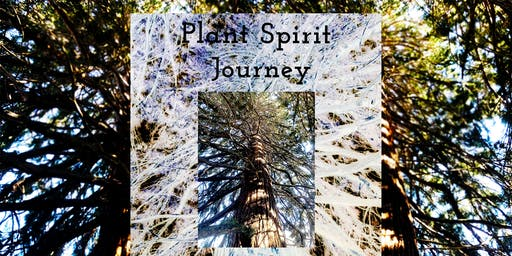 Plant Spirit Journey with Ponderosa Pine