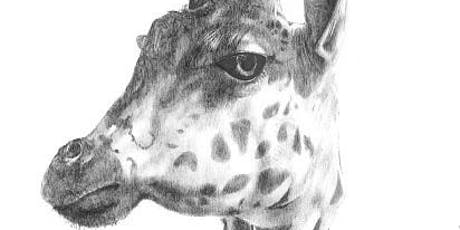 Wild about Animals! Learn to draw realistic animals tickets
