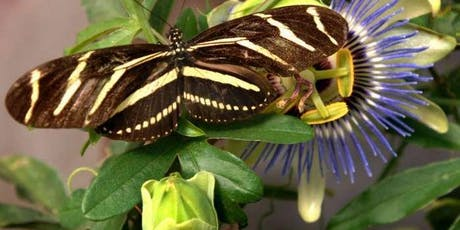 Butterfly Gardens for Central Florida tickets