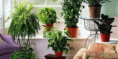 Healthy Houseplants/ Healthy Living