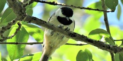 Bird Walk: Bethine Church Nature Trail