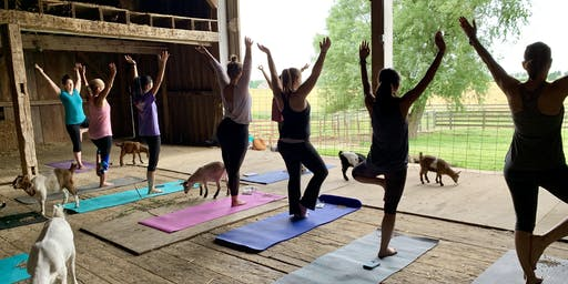 Goat Yoga at Reserve Run Family Farm