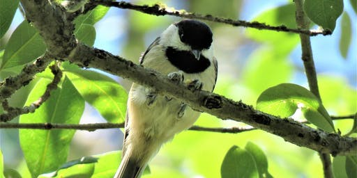 Bird Walk: Bethine Church Nature Trail