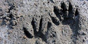 Wildlife Tracking at Estero Americano Preserve with...