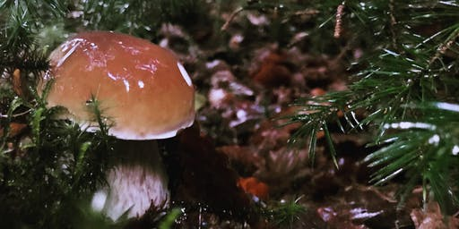 Fungi Forage