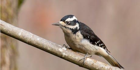 Bird Hike:  Schoolhouse Gulch tickets
