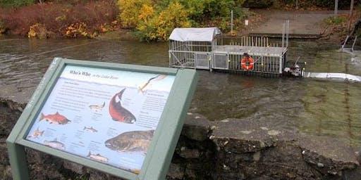 Cedar River Cleanup