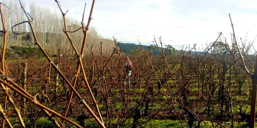 Vineyard Pruning Day at Clover Hill
