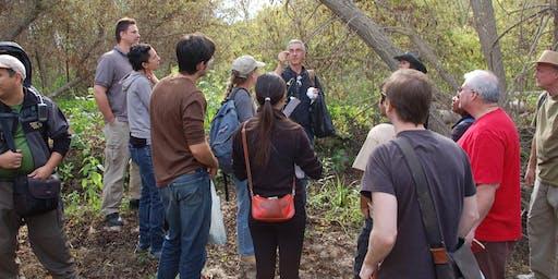 Eco-Friendly Foraging - Plants Walk / Food & Drinks