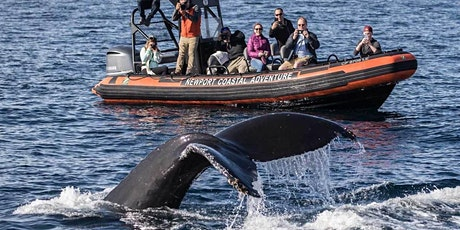 Ultimate Whale Watching Adventure tickets