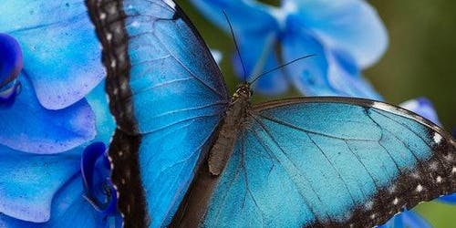 Mariposario de Benalmádena (Butterfly Park): Skip The Line