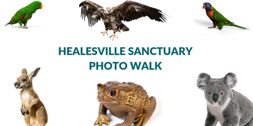 Healesville Sanctuary Photo Walk