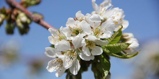 Blossom Day