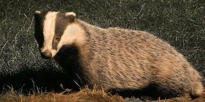 Badgerwatch