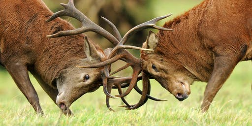 Red deer rut 4x4 safaris at RSPB Minsmere