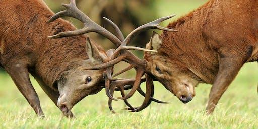 Red deer rut 4x4 safaris at RSPB Minsmere