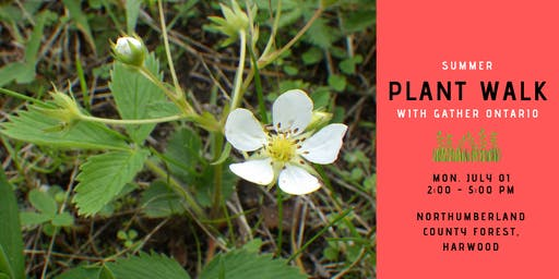 Summer Plant Walk - Northumberland County Forest