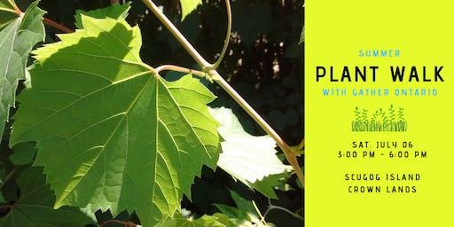 Summer Plant Walk - Scugog Island Crown Lands