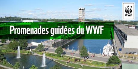 Promenade guidée WWF : L'histoire de Montréal à travers la rivière St-Pierre  tickets