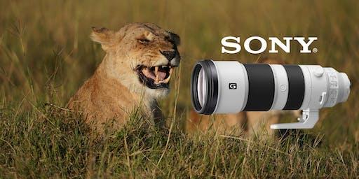New Sony 200-600 Sneak Peek