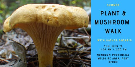 Summer Edible Plant & Mushroom Walk - Nonquon Provincial Wildlife Area tickets
