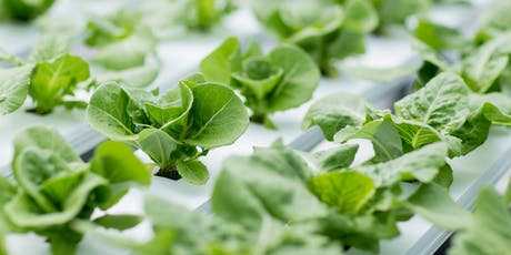 Hydroponics 101 - Fri., Sept. 20, 2019 1:00pm-4:00pm tickets