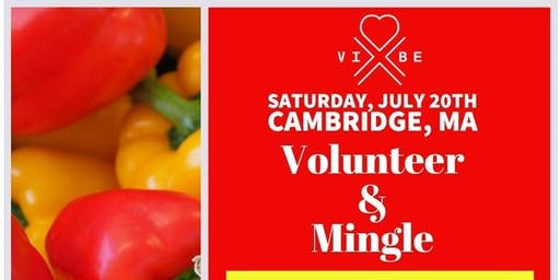 VIBE Volunteer & Mingle: The Harvest Food Pantry