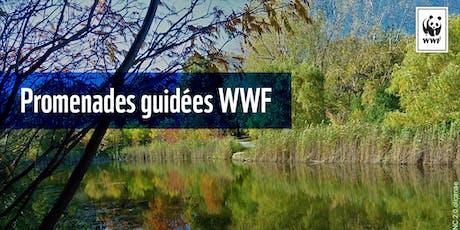 Promenade guidée WWF : la riche biodiversité urbaine du parc Angrignon billets