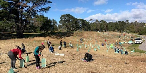 National Tree Planting Day 2019