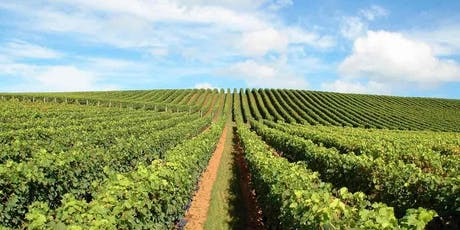 Wine Tasting Event - Rhone Valley to Waiheke Island & Matakana to Bordeaux tickets