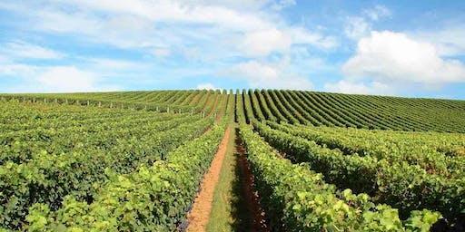 Wine Tasting Event - Rhone Valley to Waiheke Island & Matakana to Bordeaux