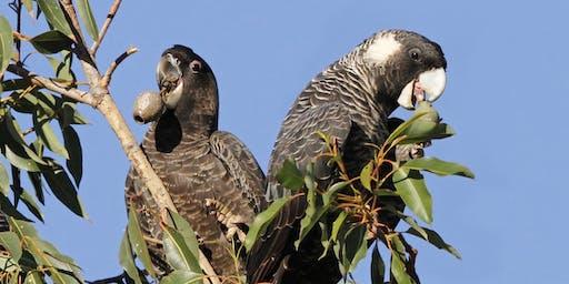 Planting event for Black-Cockatoos