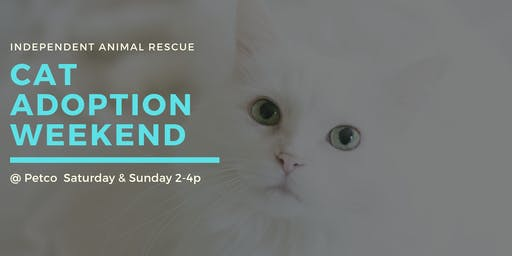 Independent Animal Rescue Cat Adoption Weekend @ Petco South Square