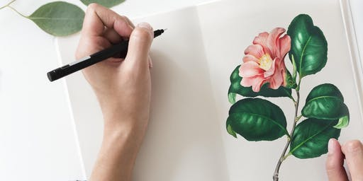 Drawing Nature. Three half-day workshops on 10, 17 and 24 September 2019