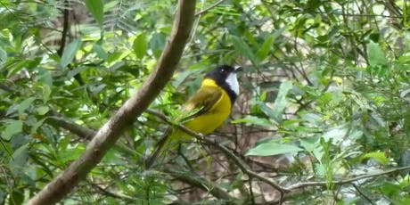 Bush Explorers: Spring into Nature - Spring Songsters - Smiths Creek tickets