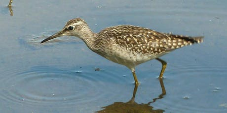 Wader Workshop at RSPB Titchwell Marsh reserve tickets
