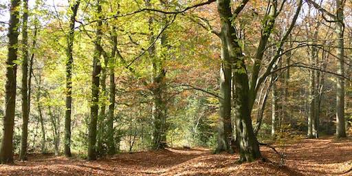 The Wild Woods of Autumn