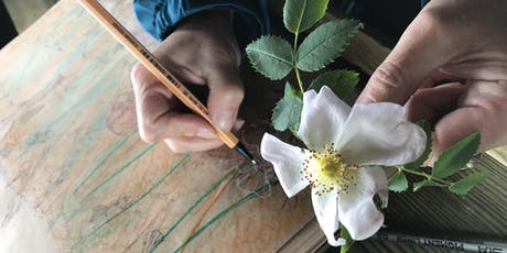 Drawing workshop – Warley Place Nature Reserve tickets