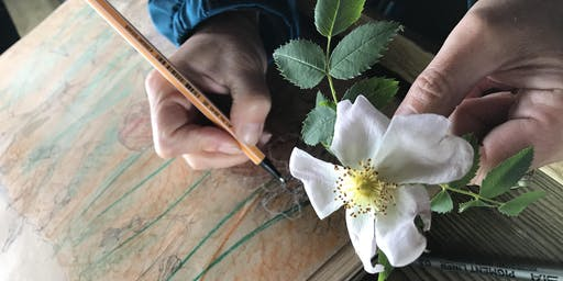 Drawing workshop – Warley Place Nature Reserve