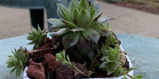 Make your own succulent diffuser.