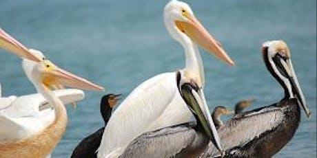 Charlotte Harbor Aquatic Preserves Nature Boat Tour Ecotour tickets