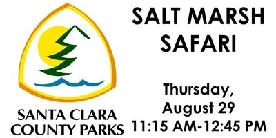 Salt Marsh Safari