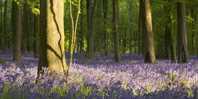 Woodland photography with Fran Halsall