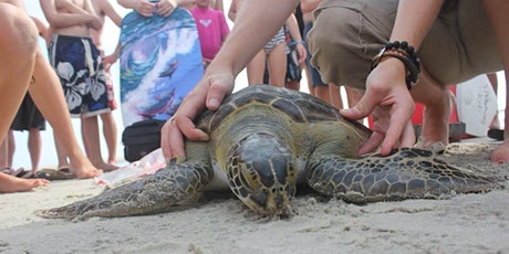 Sea Turtle Savvy tickets