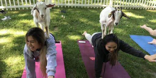 Afternoon Goat Yoga + Tastings (7/21 @ 4:15PM)