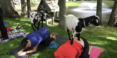 Afternoon Goat Yoga + Tastings (8/4 @ 4:15PM)